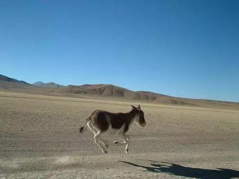 哲理故事:驴的智慧!